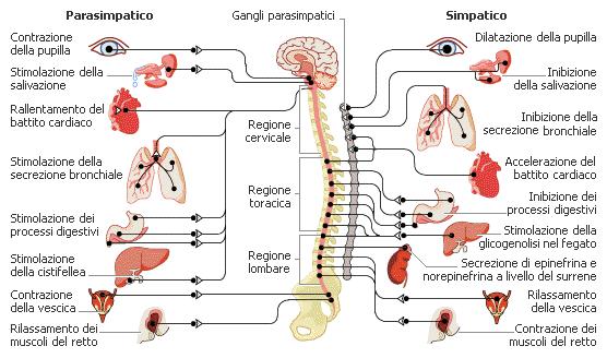 stress malattie psicosomatica treviso